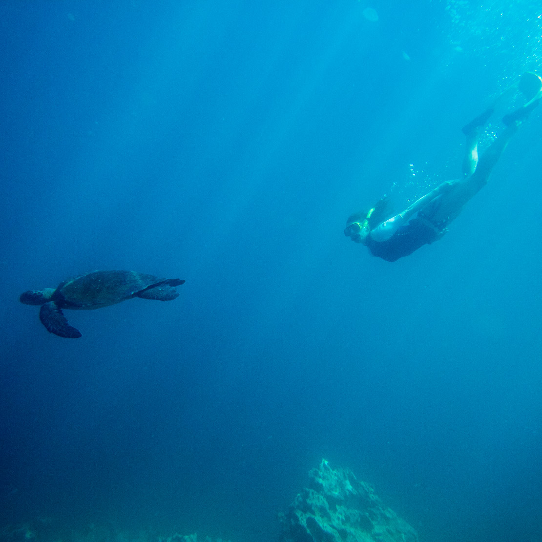 Young woman snorkeling with Green Sea Turtle in the Galapagos Islands, Ecuador.