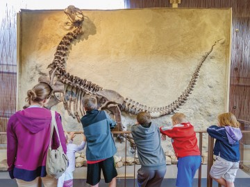 "What Puts the ""Dino"" in Dinosaur National Monument"