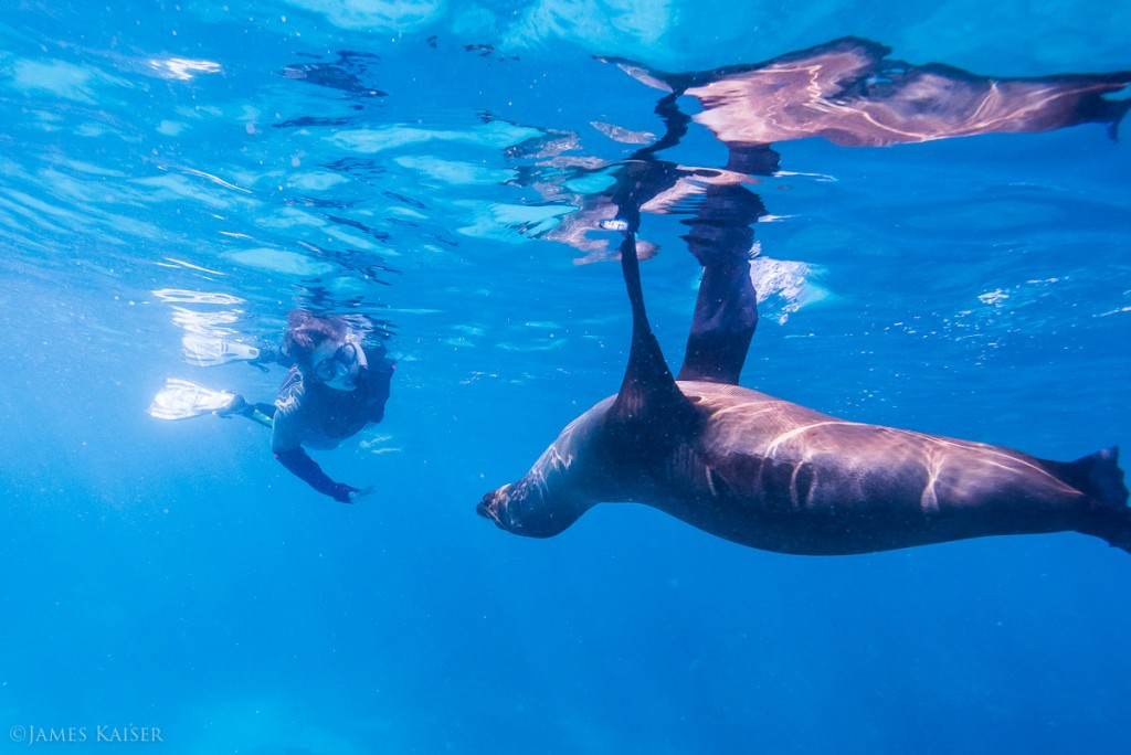 Has Tourism Ruined the Galapagos?