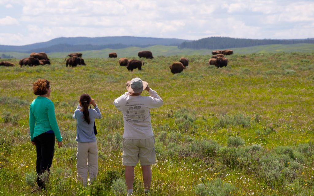 How to Plan an Epic Yellowstone and Grand Teton National Parks Vacation